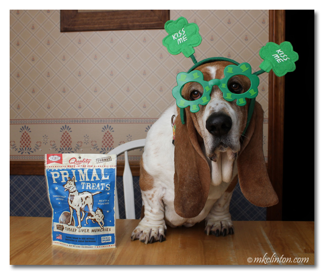 Bentley is enjoying his Primal Turkey Liver Munchies for St. Patrick's Day