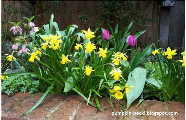 Spring bulb mixture Narcissus Tete a Tete purple tulips hellebores