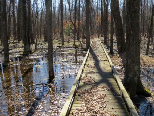 Sterling Marsh boardwalk, North Country Trail