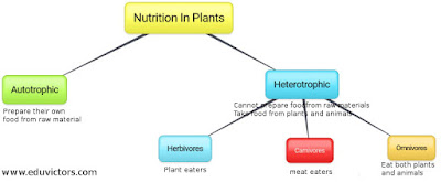 CBSE Class 7 Science - CH1 Nutrition In Plants - Questions and Answers (#cbsenotes)