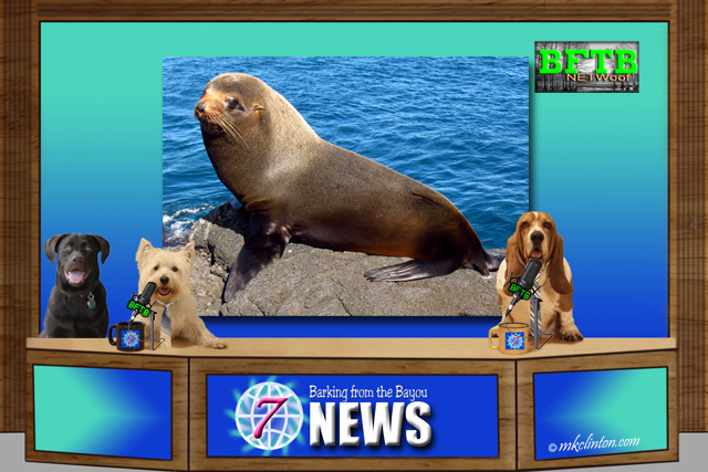 BFTB NETWoof News with a seal on background