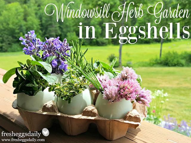 Easy Windowsill Herb Garden In Eggshells Fresh Eggs Daily
