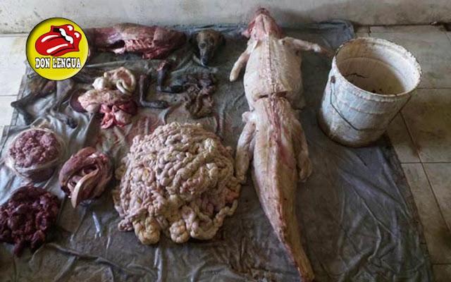 Detenido en Puerto la Cruz por vender carne de Perros y de Babas