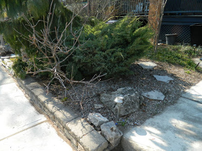 A Toronto Gardening Company Parkdale Spring Backyard Garden Cleanup After by Paul Jung Gardening Services