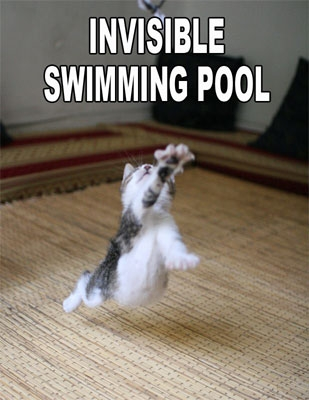 Funny Animal Pictures With Quotes - vivecsharing