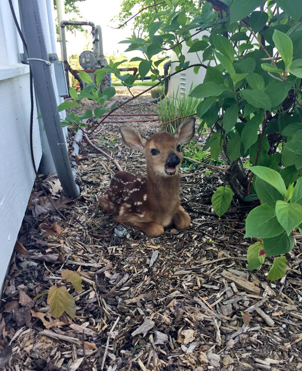 40 Heartwarming Pictures Of Animals - Found This Little Guy Sitting Outside My Front Door This Morning