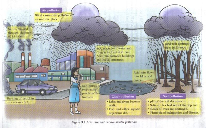 CHEMICAL LIFE: THE ACID RAIN