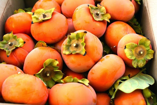 Persimmons and Home Canning Basics