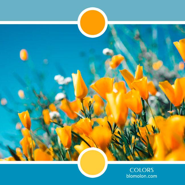 variedad_en_color_color_79