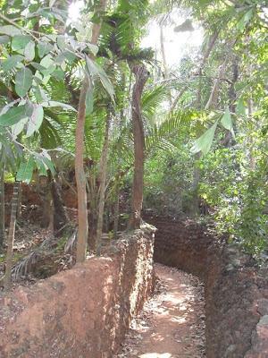 Узкая дорожка со стенами в индийских джунглях India