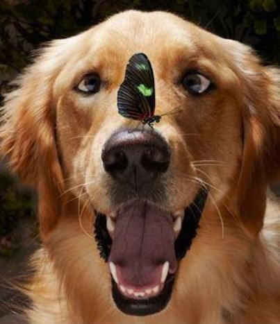 Funny dog butterfly on nose picture