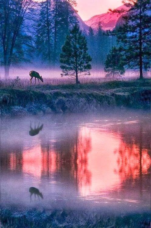 Yosemite National Park   Paraíso Maravilloso 1