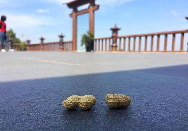 """MV """"Lạc Trôi"""" của Sơn Tùng MTP được quay tại chùa Linh Quy Pháp Ấn đã gâp sốt cộng đồng mạng"""