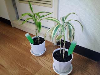 観賞植物の写真2