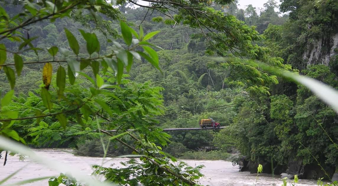 Selva ecuatorial