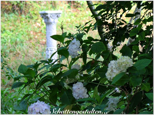 Garten am engerain bitte mehr respekt vor dem schattengarten for Schattiger garten gestalten