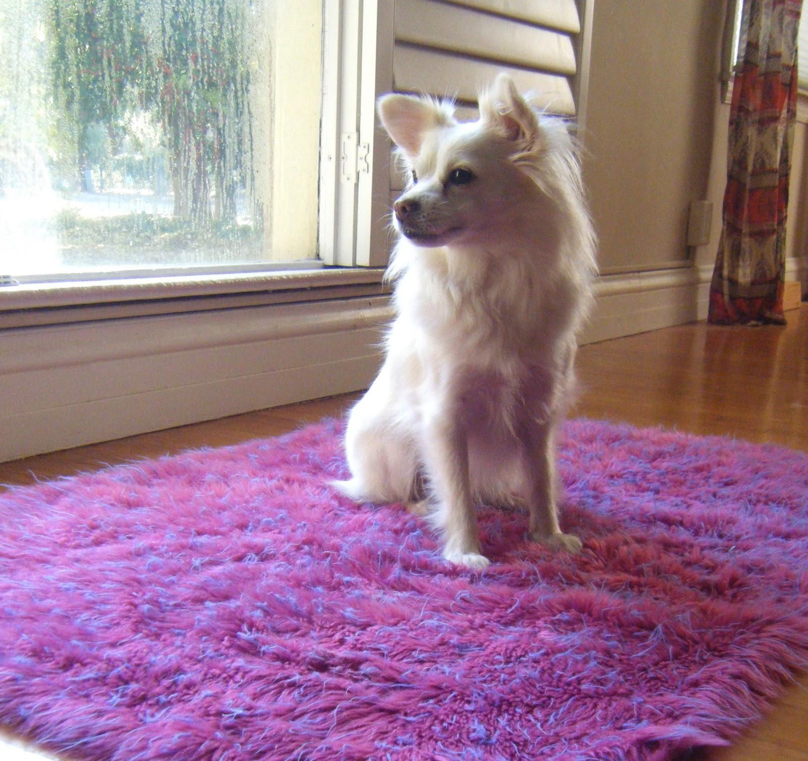 Dog Tears Up Rug: Sew DoggyStyle: Upcycled Shag Rug Dog Bed