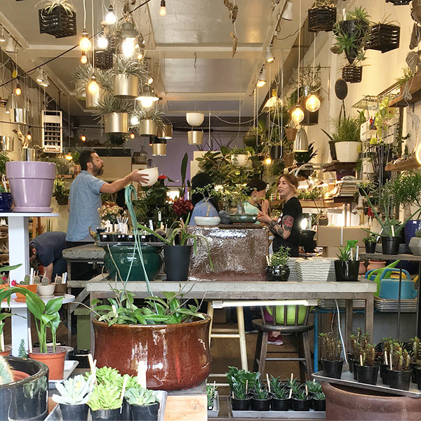 A plant shop in Ballard, Seattle