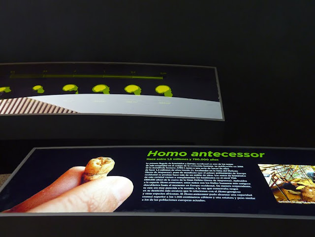 Panel del Homo Anteccesor
