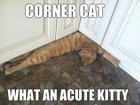 Funny Cat Meme Pictures : Lovely cat memes