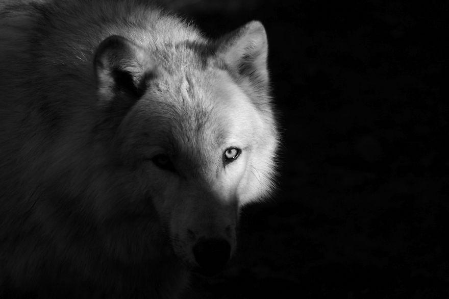 omorfos-kosmos.gr - Εντυπωσιακά πορτρέτα ζώων (Εικόνες)