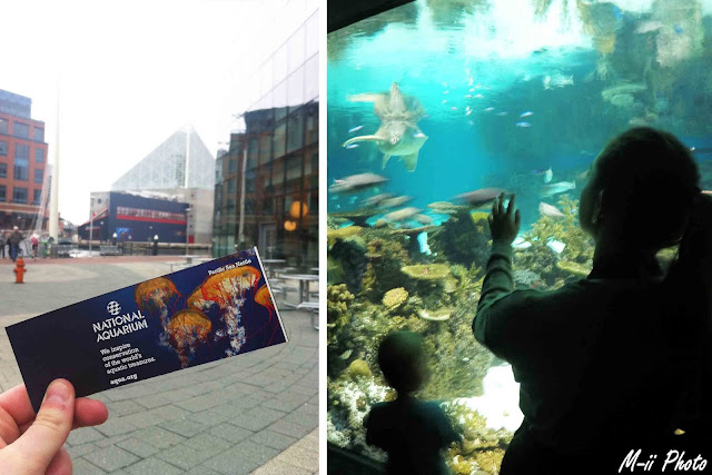 My Travel Background : A la découverte de Batimore, Aquarium