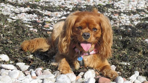 Freya Rose Blossom resident South Devon beach bum
