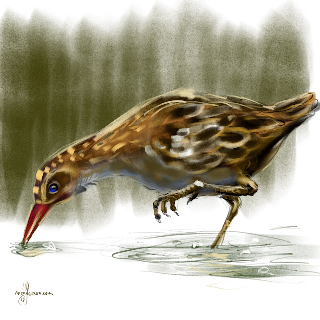 Water Rail bird painting by Artmagenta