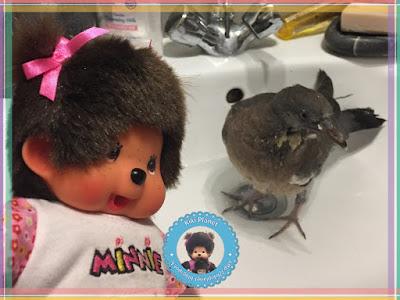 Diana la Monchhichi et Colombine le bébé pigeon - pigeonneau - oisillon