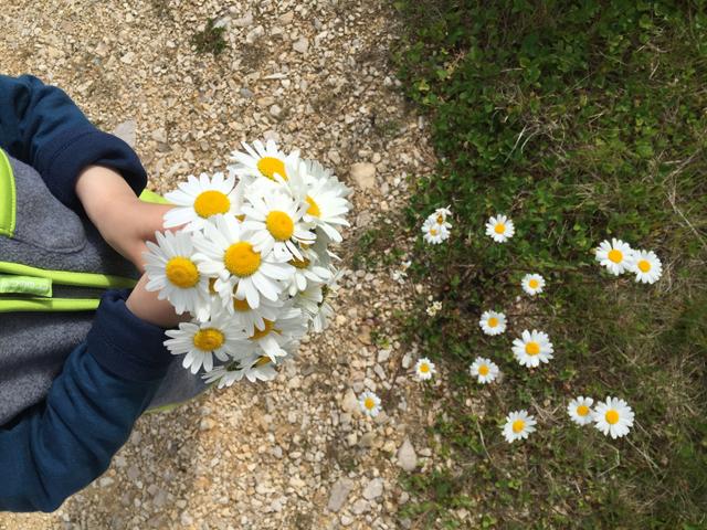 Blumen pflücken am Wegesrand