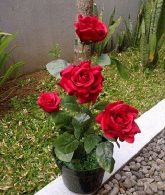 Koleksi Terkini 26 Gambar Bunga Mawar Merah Dalam Pot