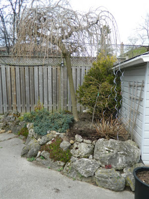 Scarborough rock garden with weeping mulberry before by garden muses-not another Toronto gardening blog
