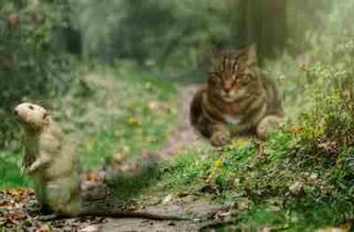 Ilustrasi Kucing Berburu Tikus