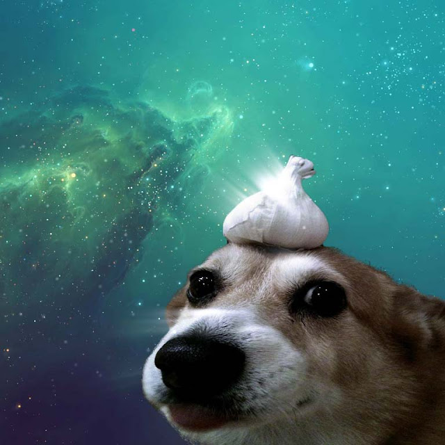 Garlic Dog Wallpaper Engine