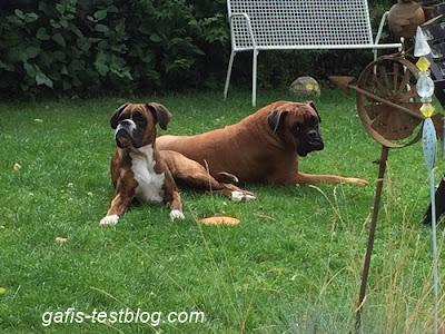 Amy und Elvis im Gras