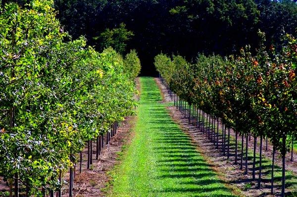 Cultivar rboles frutales econom a nutrici n plantas - Como plantar arboles frutales ...