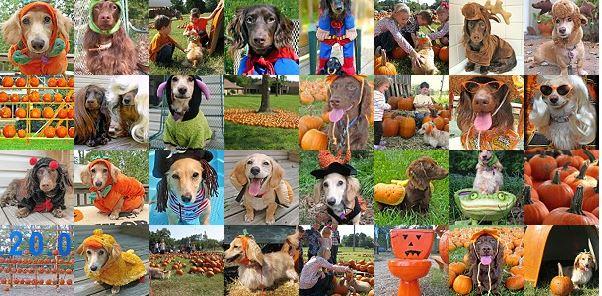 fotos de Perros disfrazados para Halloween