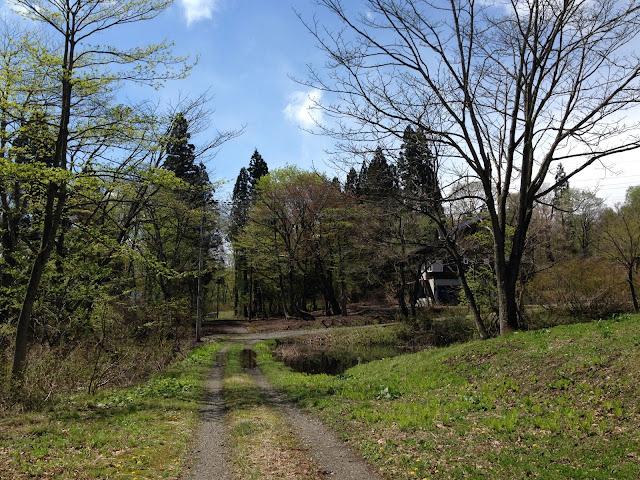 春の妙高の小道の写真