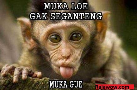 Itulah  Monyet Lucu Yang Admin Kumpulkan Selama  Hari Semoga Bisa Menghibur Dan Dapat Kita Manfaatkan Hikmahnya Karena Setiap Apa Yang Di
