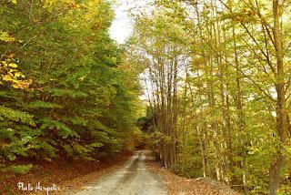 Φθινόπωρο στην Ελαφίνα Ημαθίας (Photo Hasapetis)