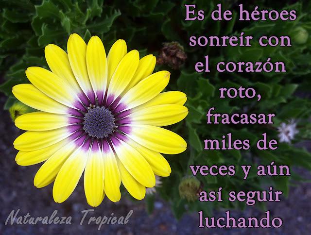 Es de héroes sonreír con el corazón roto, fracasar miles de veces y aun así seguir luchando por nuestro amor.
