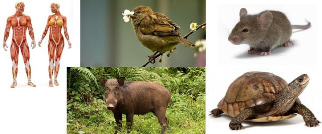 Hem Etçil Hem Otçul Hayvanlar