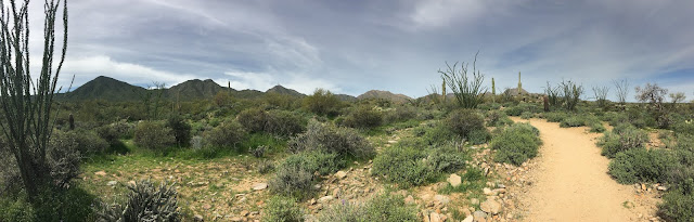 Sonja Stone, the Sonoran desert
