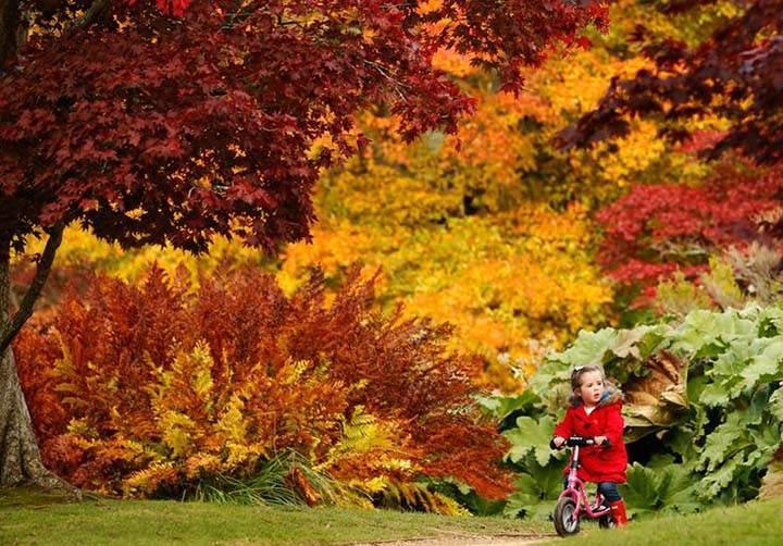 orman gezisi yaparken sonbahar manzaralı resim