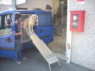 rampas para transporte de cães