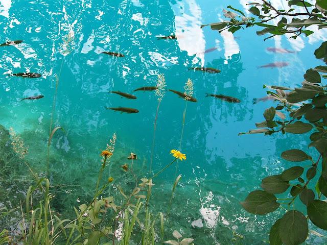 جولة سياحية أجمل البلاد مستوى العالم كرواتيا بليتفيتش Spectacular-blue-lakes-of-Paradise-Plitvicka-jezera-the-lakes-national-park-in-Croatia.jpg