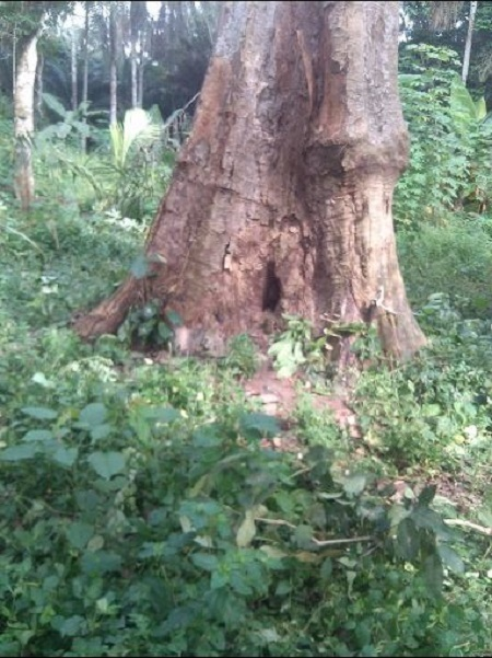 Drama as Village Chief Priest Runs for His Life After Youths Destroy His Evil Forest in Imo (Photos)