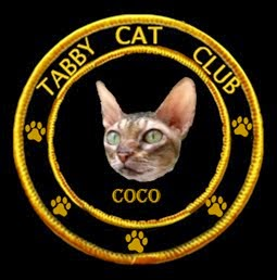 Coco's a Member of the Tabby Cat Club
