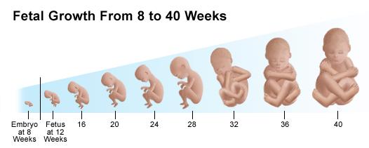 manfaat daun singkong untuk kesehatan bayi