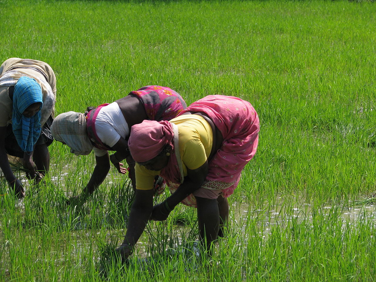 indian agriculture challenges Wwwindiastatcom october -november, 2014 1 socio economic voices foreign direct investment in indian agricultural sector: opportunities and challenges states.
